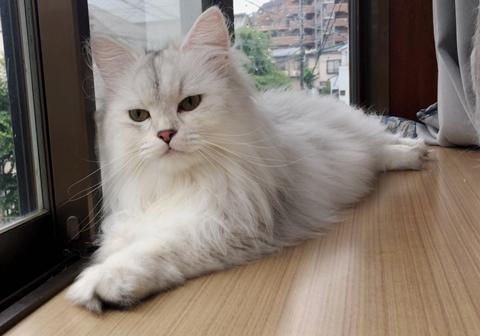 【逆鱗日和W】第48回:オトモアイルーで、愛猫を作れ!